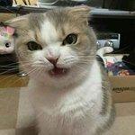 Chen_gf
