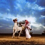 Alkaeed