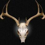 Deerhunter76